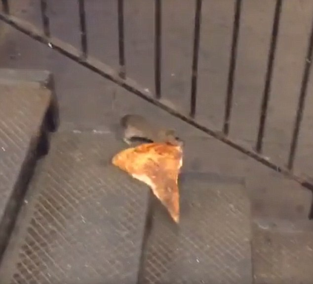 00001 mouse with pizza
